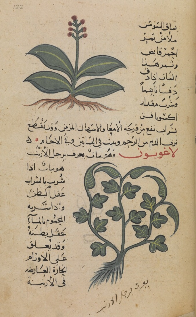 Arabic Scientific Manuscripts of the British Library