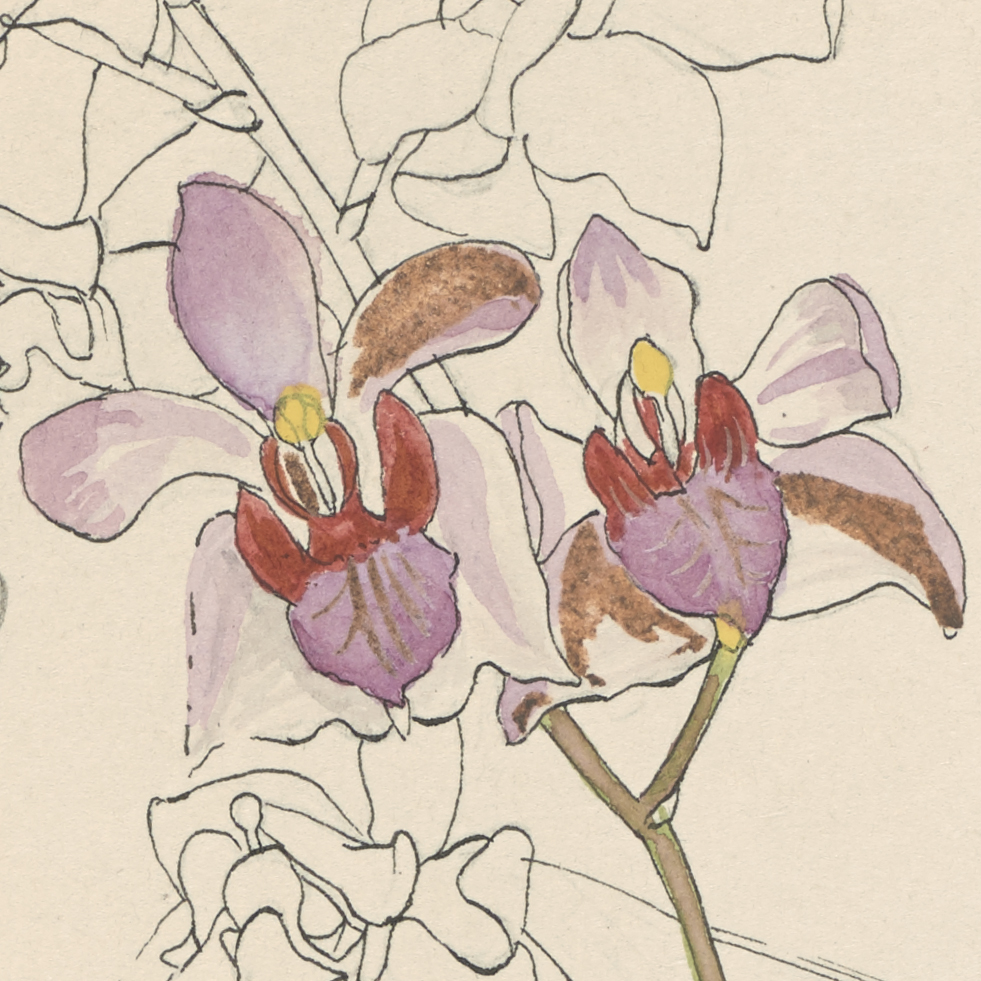 The Scientific Notebooks of German Orchidologist Friedrich Wilhelm Ludwig Kränzlin